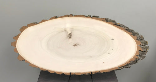 Cottonwood Sanded Bark on Wood Slice