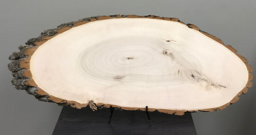 Sanded Cottonwood Bark on Wood Slice