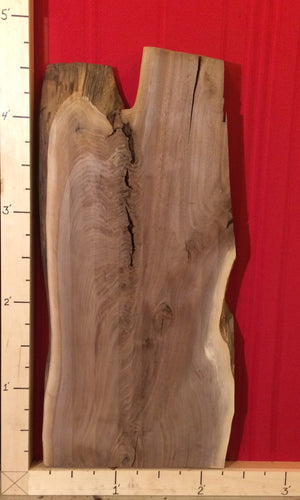 Black walnut live edge slab