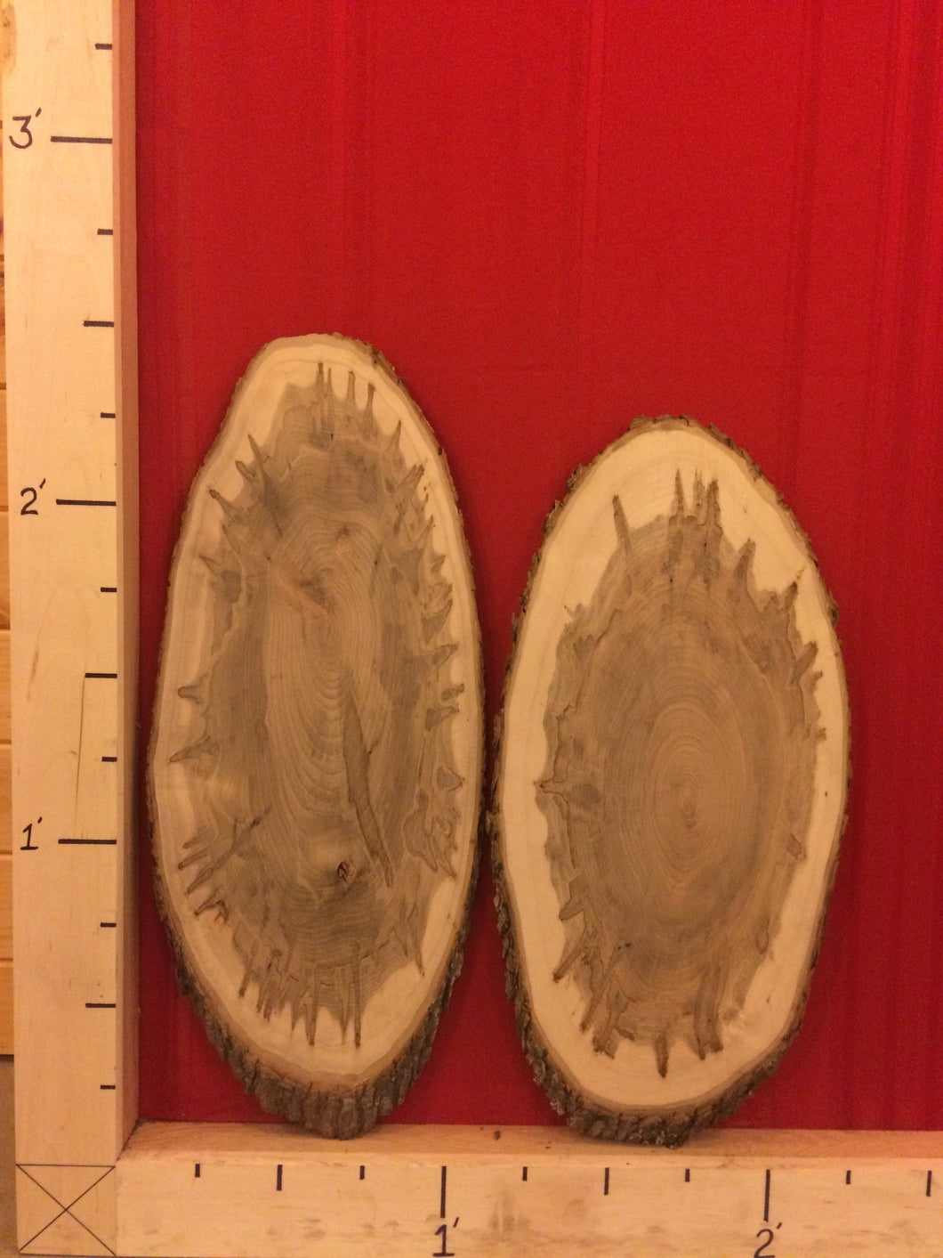 Wormy Maple Wood Slices