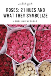 ROSES: 21 Hues and What They Symbolize | Wicked Good