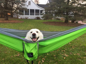 A white fluffy dog smiles staring at the camera while laying in a green camping hammock