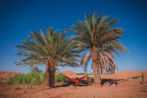 A man relaxes in his red camping hammock between two massive palm trees in the middle of the desert