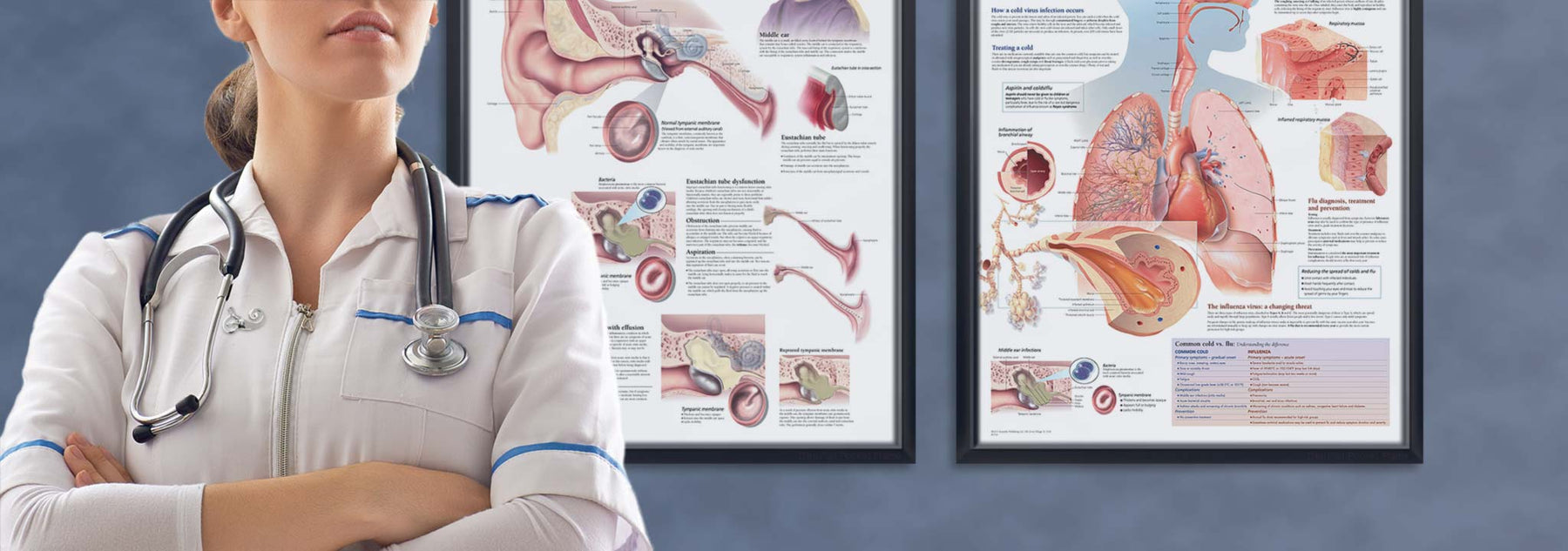 Female doctor with framed anatomy posters