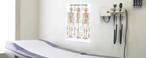 Anatomy Poster Unframed