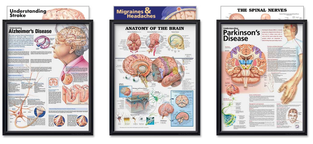 Neurology Bundle