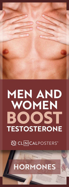How Much Testosterone is Normal For Your Age?