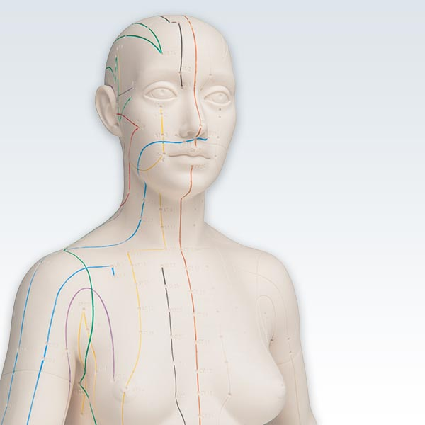 Acupuncture Female Figure Model Detail