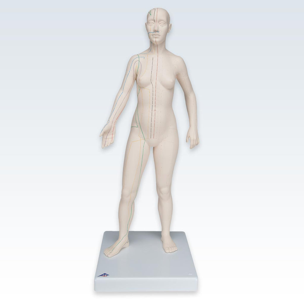 Acupuncture Female Figure Model
