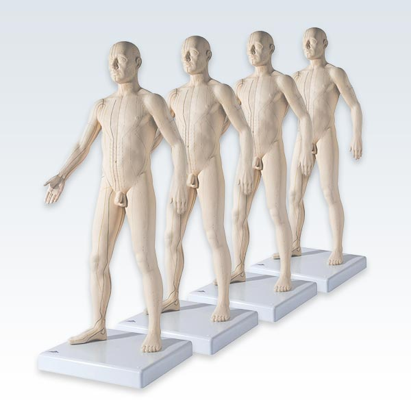 meta-4 Acupuncture Male Figure Models