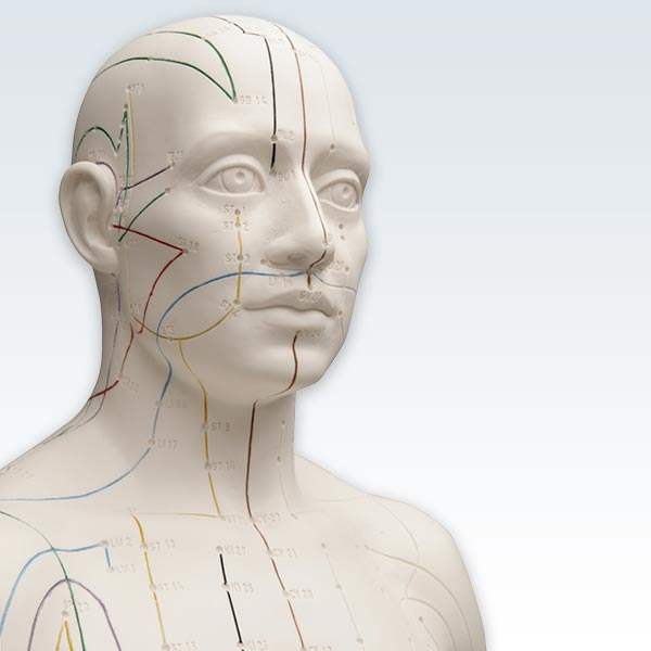 Acupuncture Male Figure Model Detail