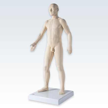 Acupuncture Male Figure Model