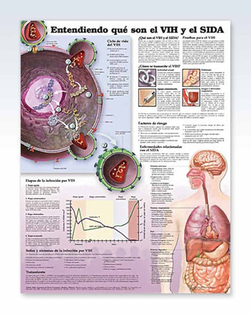 Spanish AIDS anatomy poster