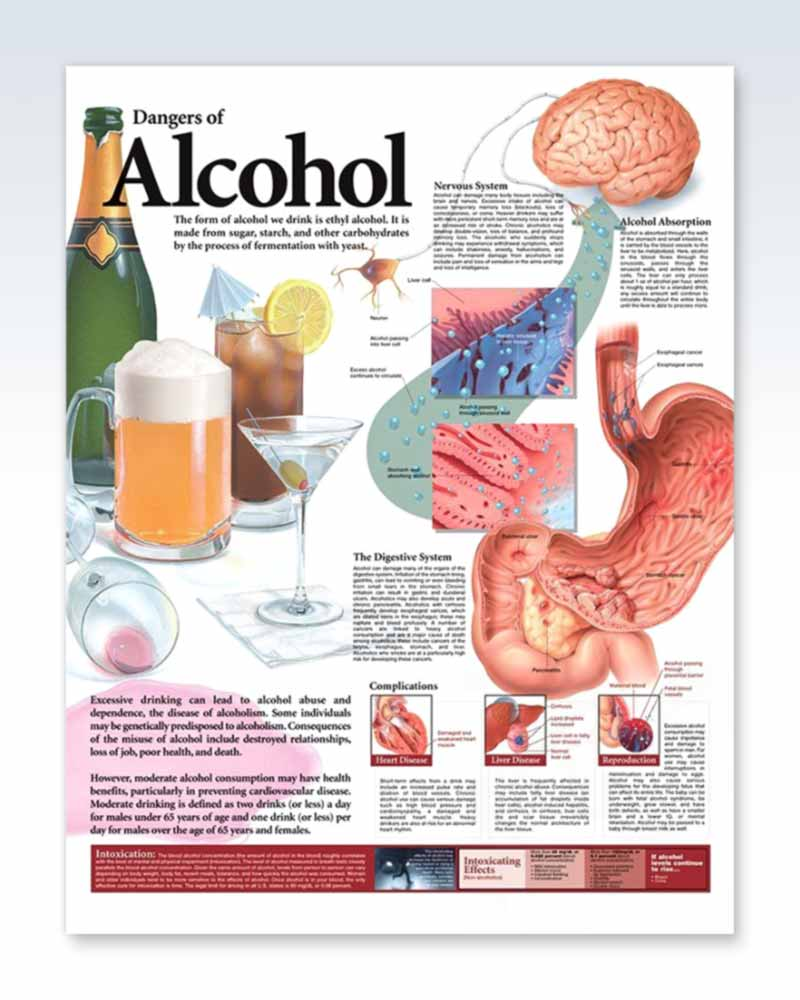 Dangers of Alcohol anatomy poster