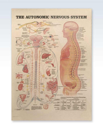 Laminated Autonomic Nervous System Kraft Chart