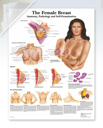 The Female Breast Chart (d) 20x26
