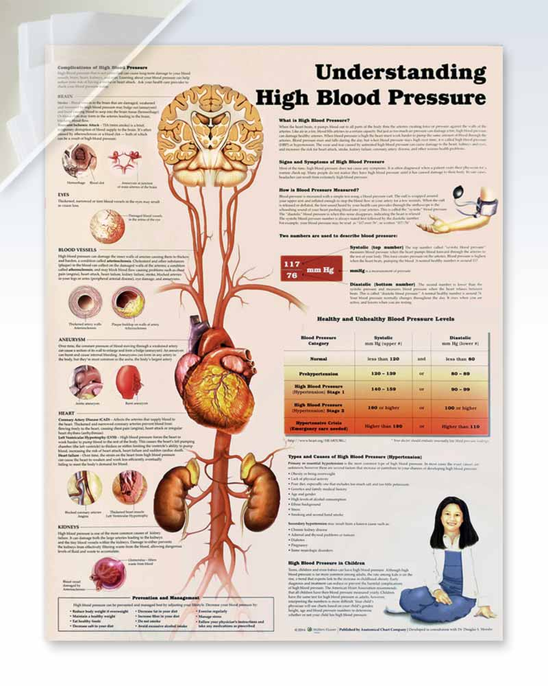 Understanding High Blood Pressure (d) 20x26