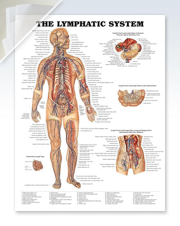 Lymphatic System damaged poster