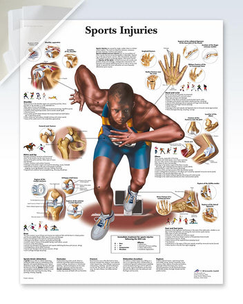 Sports Injuries Anatomy Poster