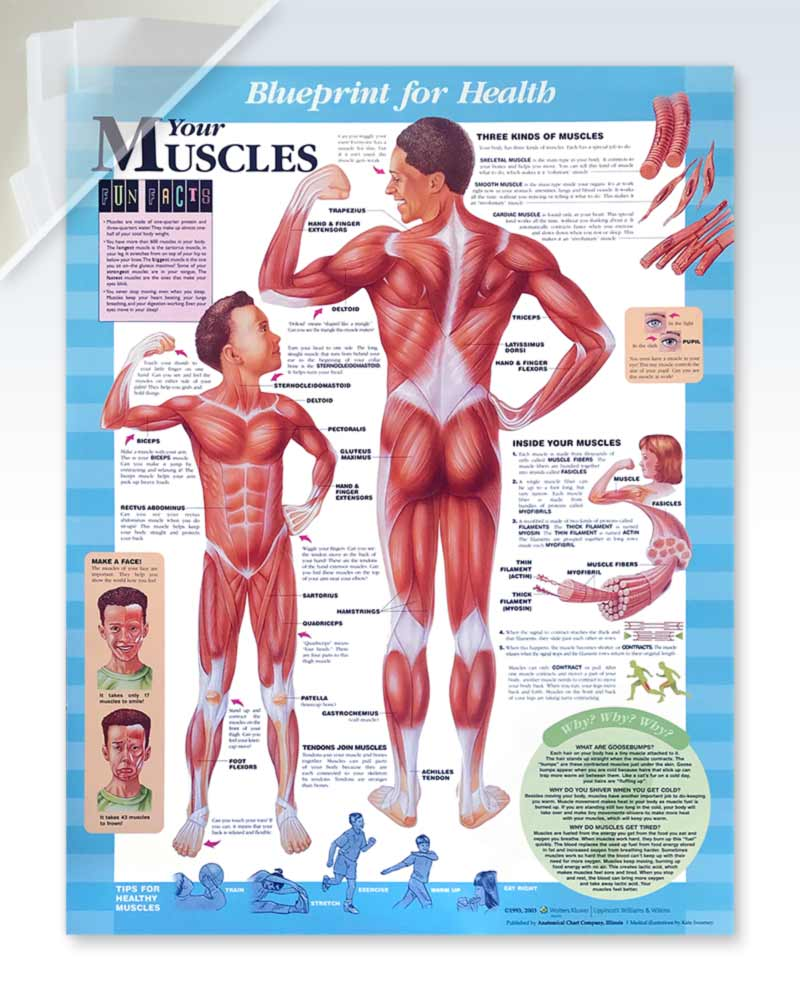 Your Muscles pediatric damaged poster