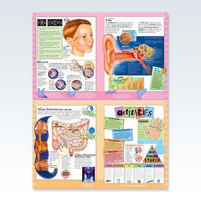 Adventure in Human Anatomy Book sample pages