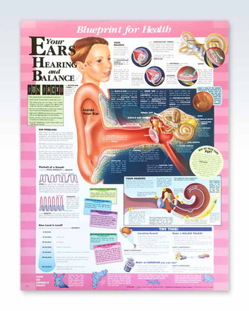 Your Ears Hearing and Balance poster