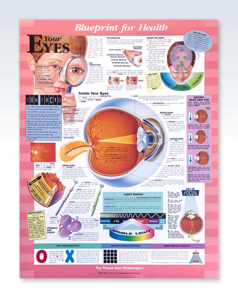 Your Eyes pediatric anatomy poster