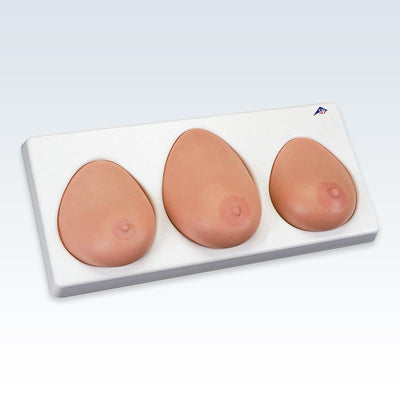 Breast Self-Examination Model