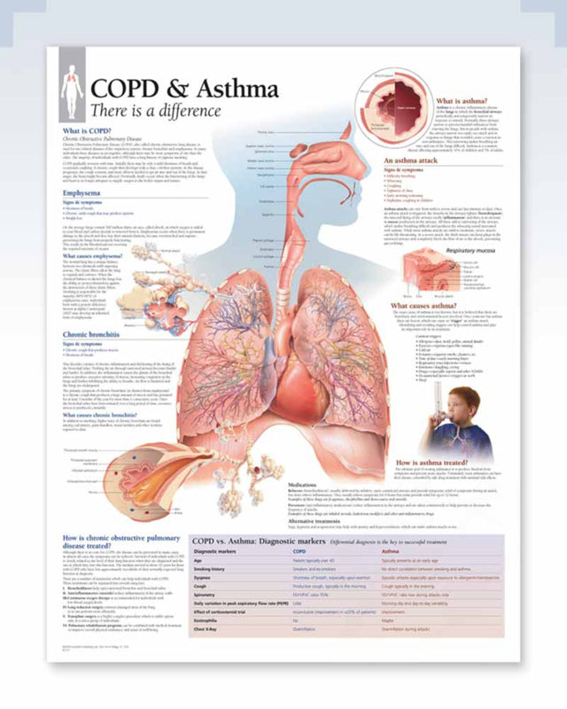 COPD & Asthma Anatomy Poster