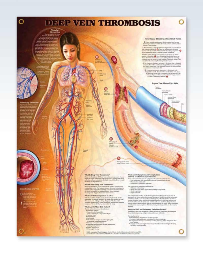Cardiology Human Anatomy Posters – ClinicalPosters