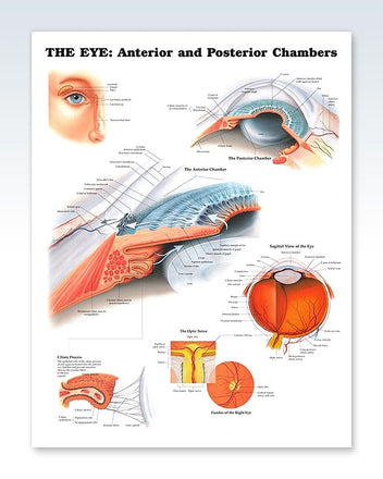 The Eye: Anterior and Posterior Chambers poster
