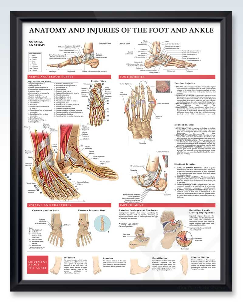 Anatomy and Injuries of the Foot and Ankle Exam Room Poster ...