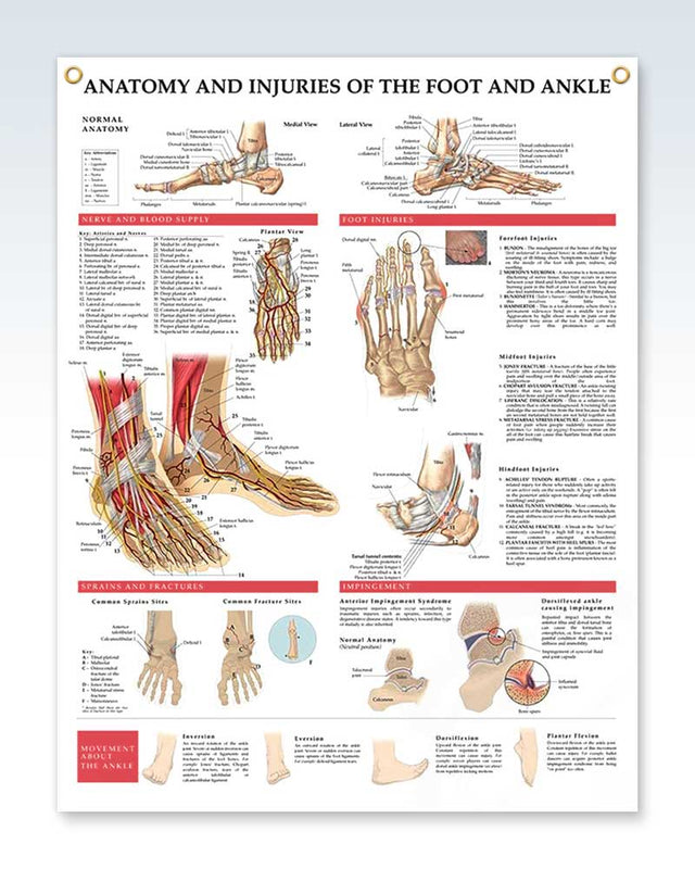 Anatomy And Injuries Of The Foot And Ankle Exam Room Poster