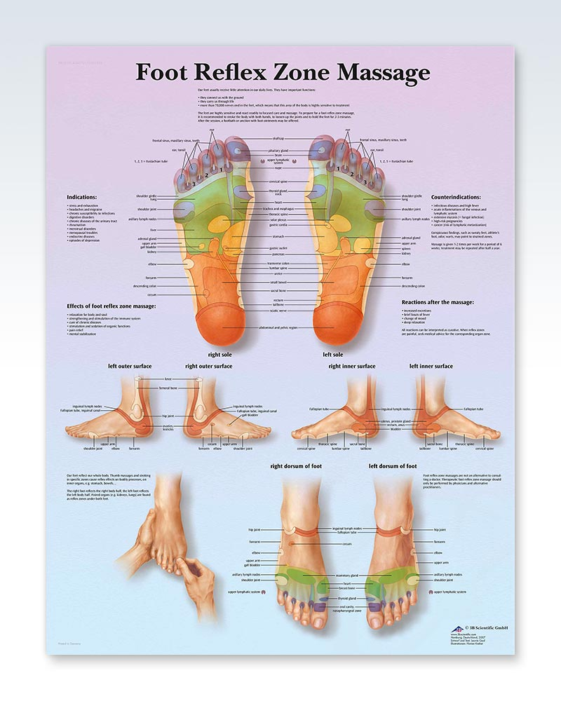 Foot Reflex Zone Massage Exam Room Anatomy Poster Clinicalposters