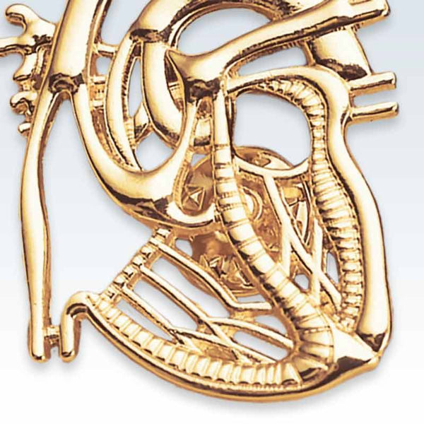 Anatomical Dissected Large Heart Gold Lapel Pin
