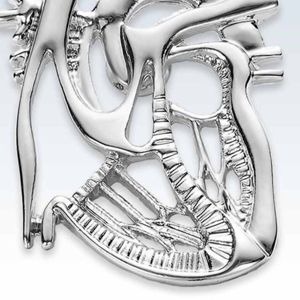 Anatomical Dissected Heart Silver Lapel Pin