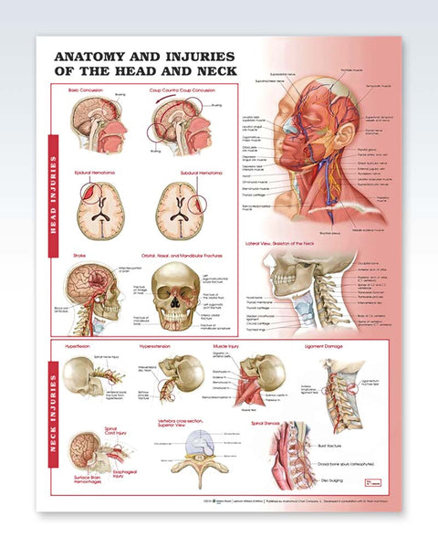 Anatomy and Injuries of the Head and Neck poster