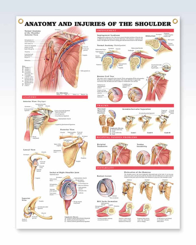 Injuries Of The Shoulder Exam Room Anatomy Poster Clinicalposters