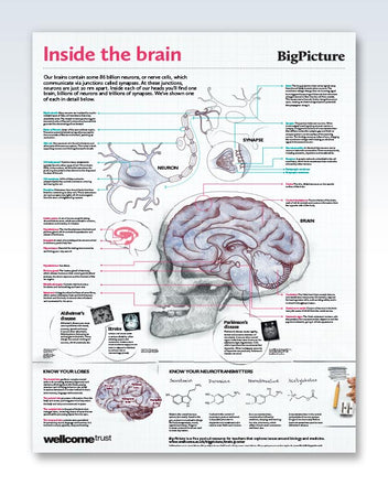 Inside The Brain Chart