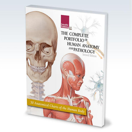 Portfolio of Human Anatomy and Pathology book