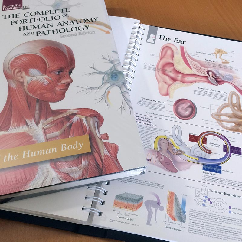 Portfolio of Human Anatomy and Pathology Inside