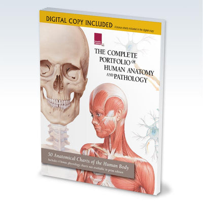 Digital Portfolio of Human Anatomy and Pathology
