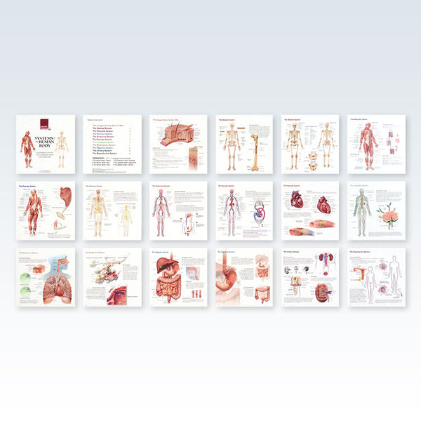Systems of the Human Body Pages