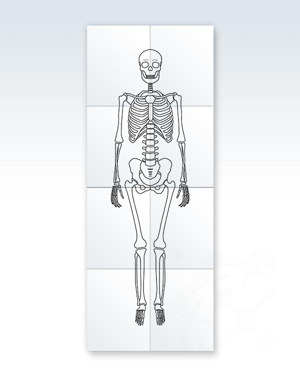 This is a graphic of Printable Skeleton inside diagram