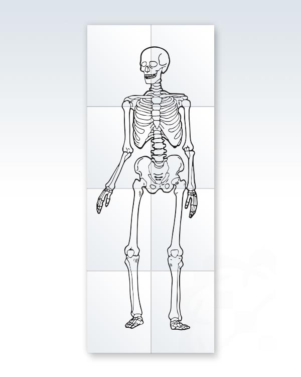 Printable Child-Size Skeleton