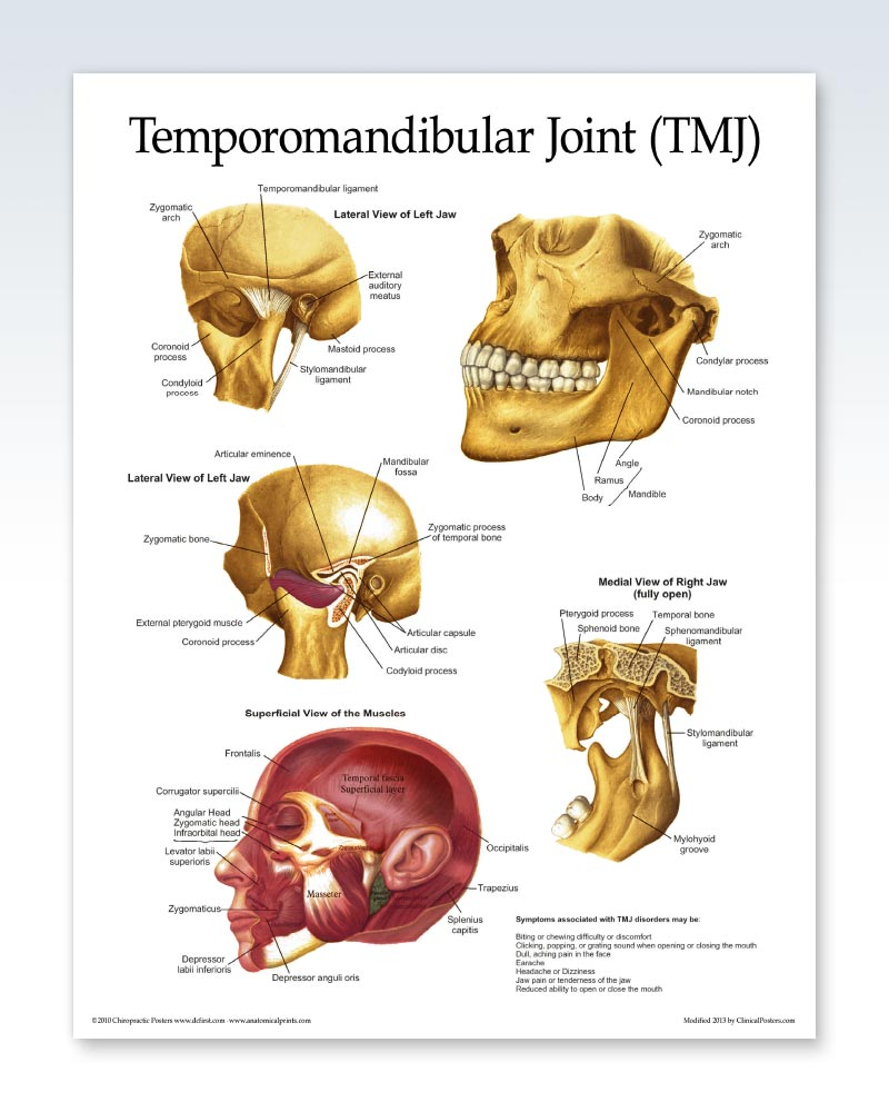 Temporomandibular Joint Chart 8.5x11