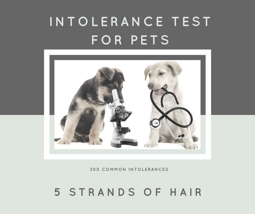 Intolerance Test For Pets