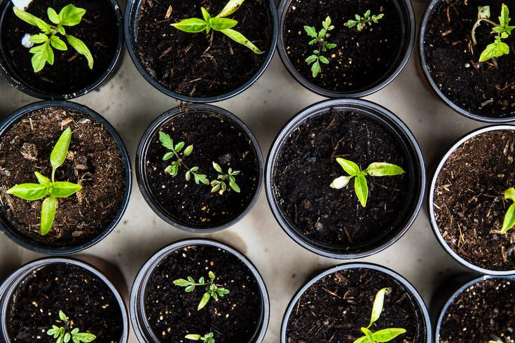 Have you chosen the right potting soil for your plants?