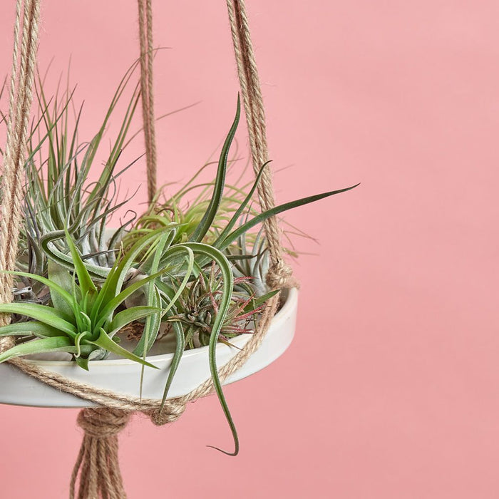 4 Awesome Air Plant Facts You Need To Know!