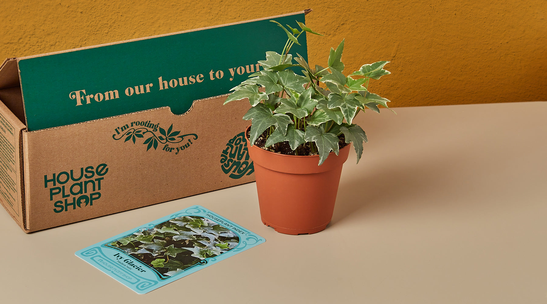 House Plant Shop Fast Shipping Nationwide Guarantee On All Plants